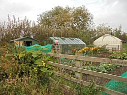 The Allotment at The Butterfly Garden. A project for people of all ages dealing with disablement of any kind.